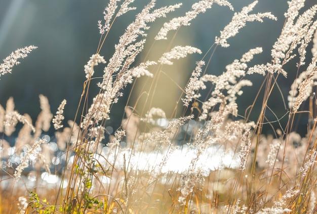 Zonnige herfstweide. natuurlijke achtergrond.