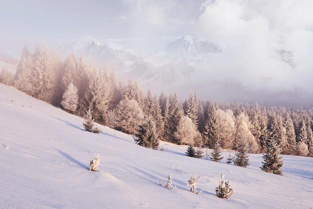 Zonnige ochtendscène in het bergbos. heldere winterlandschap in het besneeuwde hout