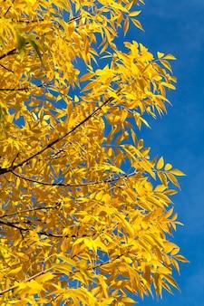 Zonnige of bewolkte herfst met bomen die de kleur van het gebladerte veranderen, park