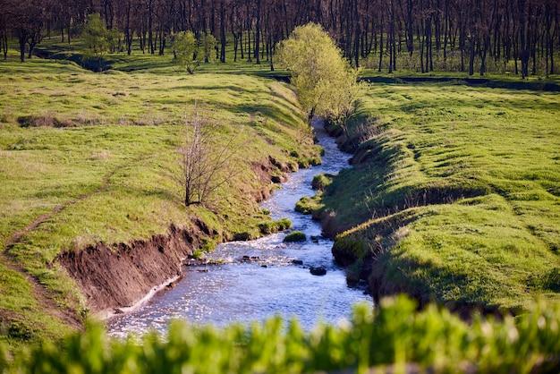 Zonnige open plek in de bos de lentedag.