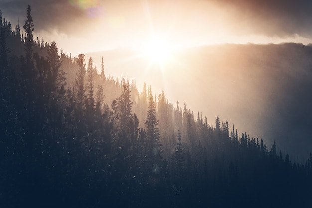 Zonnige winter hills