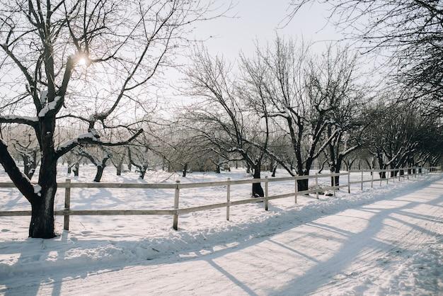 Zonnige winterdag in een besneeuwd park