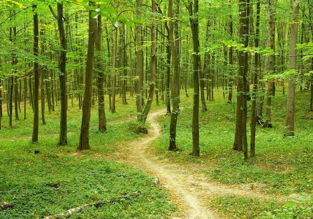 Zonnige zomerdag in groen bos