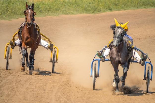 Zonnige zomerdag op de hippodroom. twee paarden die aan karren zijn gespannen, zijn ren