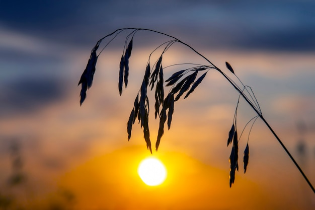 Zonsondergang aan de hemel op de achtergrond van riet
