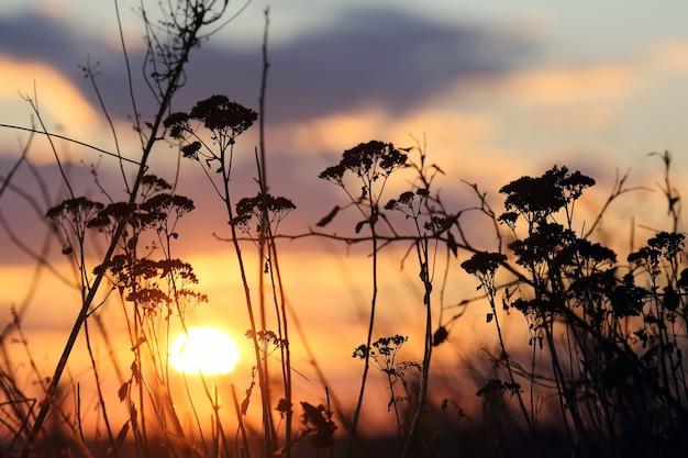 Zonsondergang aan de hemel op het gras