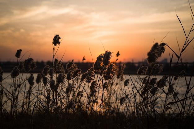 Zonsondergang bij het meer