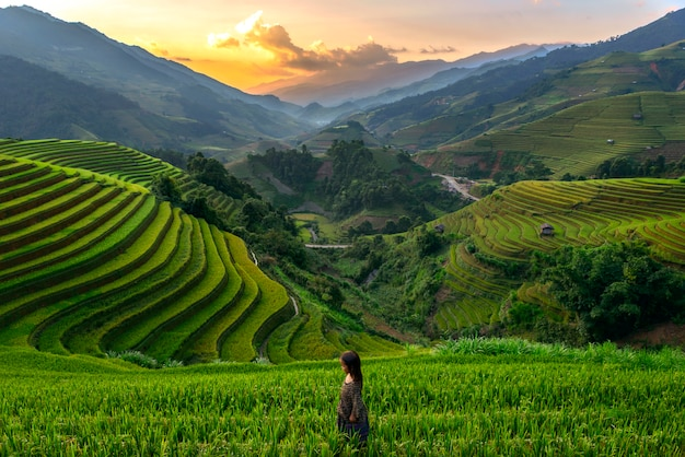 Zonsondergang bij riceteraces mu cang chai, yenbai, vietnam.