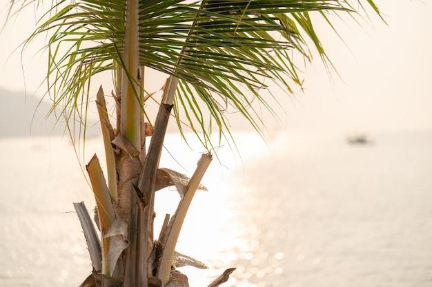 Zonsondergang boven de zee met kokospalm op het tropische strand en oranje pastel hemel.