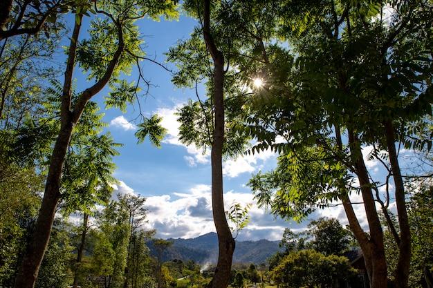 Zonsondergang door bomen met gloedlens, het nationale park van khao yai, thailand