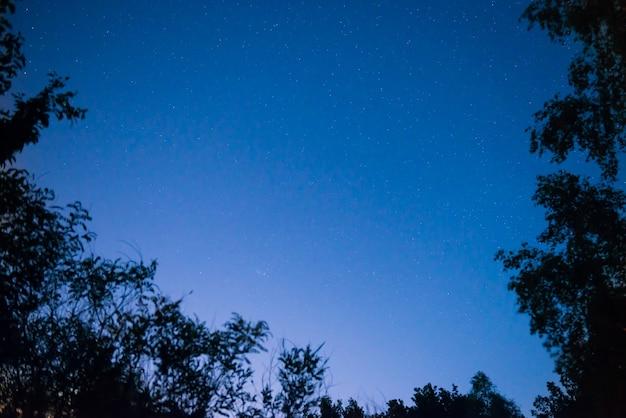 Zonsondergang en nacht donkerblauwe hemel in bos met heldere sterren als ruimteachtergrond