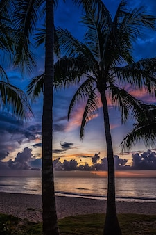 Zonsondergang en palmenaard.
