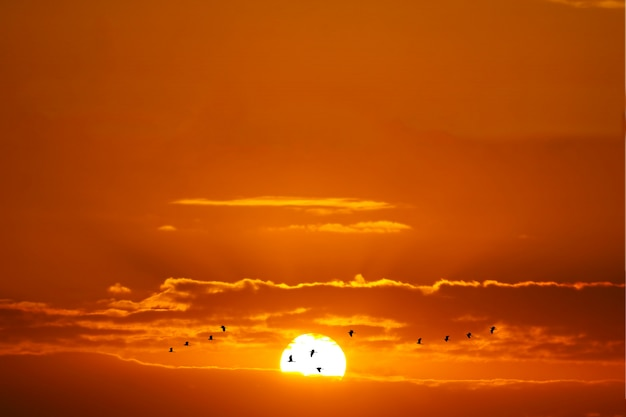 Zonsondergang en silhouetvogels die rode witte wolk en oranjegele gouden hemel vliegen