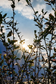 Zonsondergang in de bergen en heuvels in itaipava tegenlicht op de voorgrond planten selectieve focus