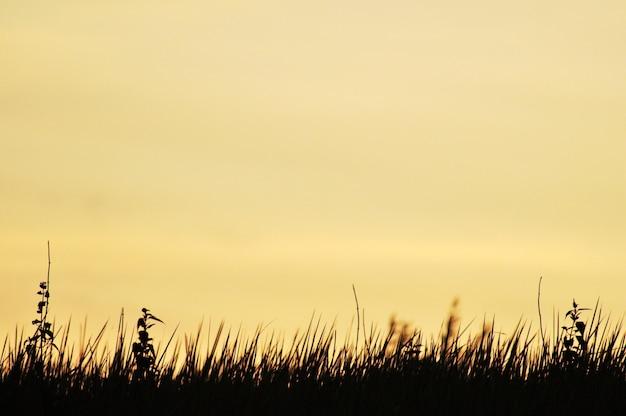 Zonsondergang in de natuur