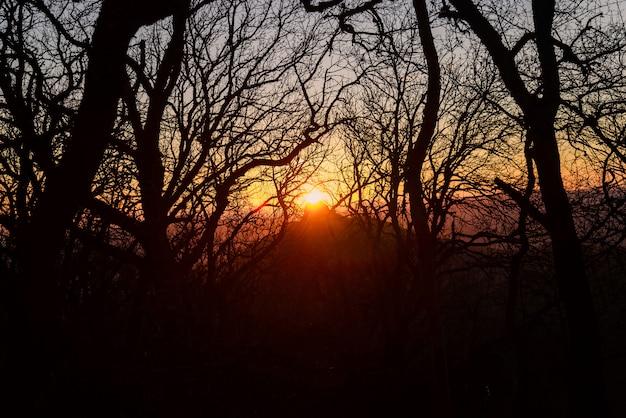 Zonsondergang in een bos door de bomen