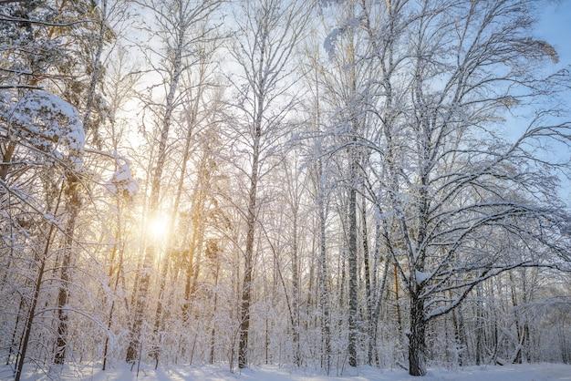 Zonsondergang in het de winterbos