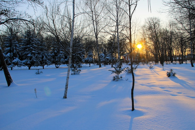 Zonsondergang in het stadspark in de winter