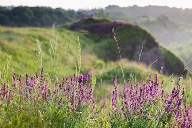 Zonsondergang in het veld tussen de kruiden