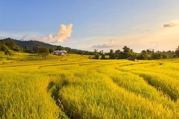 Zonsondergang in terrasvormig paddy field in mae-jam-dorp, chiang mai province, thailand