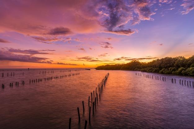 Zonsondergang mangrovebos.