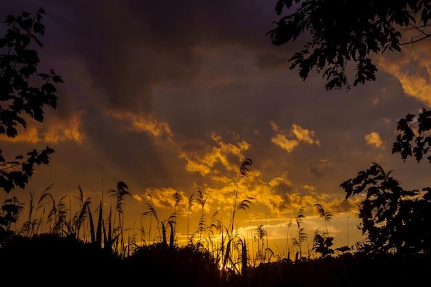 Zonsondergang of zonsopgang. het riet en de zon. de natuur in de avond. zonsondergang aan het water. oren van gras vangen de wind. rode lucht van ondergaande zon. 4k-video.