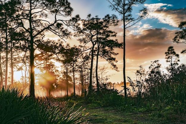 Zonsondergang op het bos