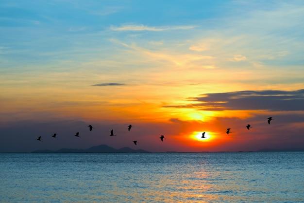 Zonsondergang op zee en silhouetvogels die over zeeoppervlak naar huis vliegen