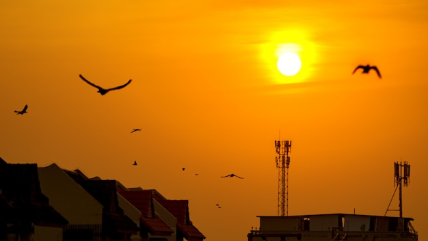 Zonsondergang over antenne bij de bouw van dak met vliegende vogel.