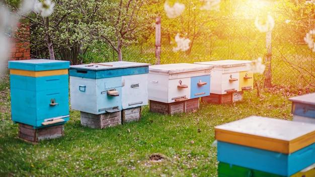 Zonsondergang over de bijenstal in tuin. lentehoning oogst. bijen voorbereiden op het seizoen. bijenstal met stammenbijen op groen gras.