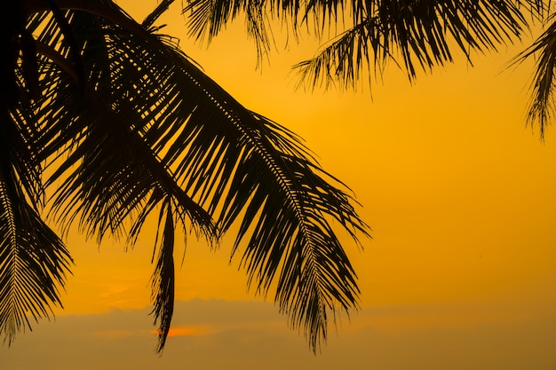 Zonsondergang over de indische oceaan door palmtakken.
