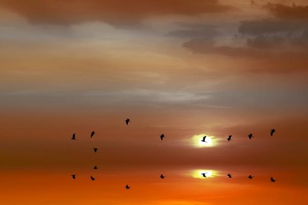 Zonsondergangbezinning over overzees en silhouetvogels die naar huis over waterspiegel vliegen