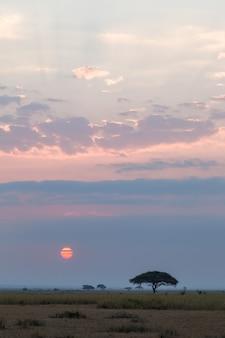 Zonsonderganglandschap in de savanne amboseli kenia afrika