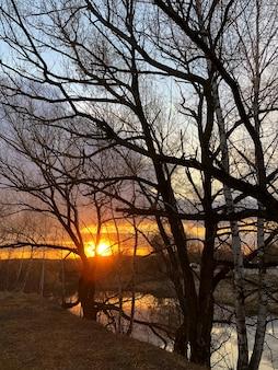 Zonsonderganglichtstralen die door boomtakken schijnen