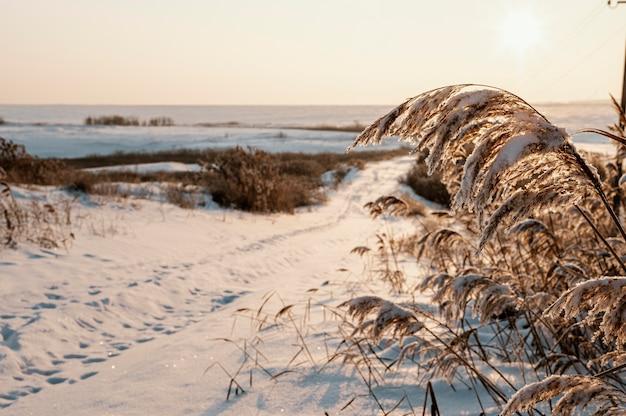 Zonsondergangmening van de besneeuwde winter