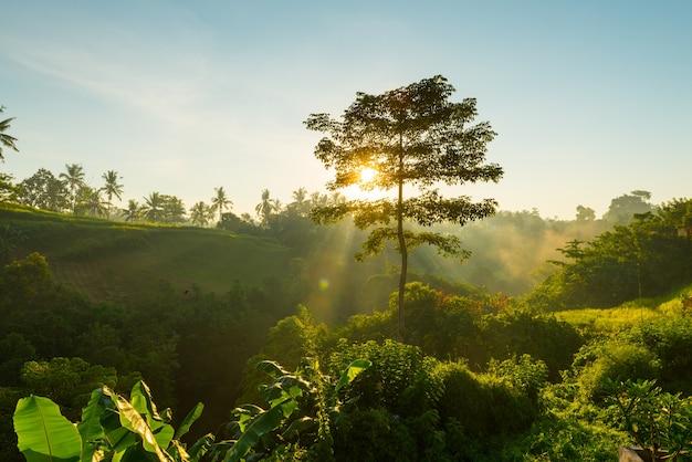 Zonsopgang boven de jungle van bali
