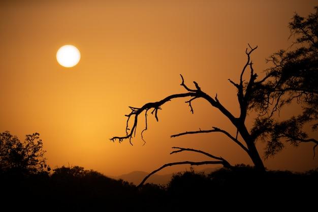 Zonsopgang boven de savanne met bomen op de voorgrond