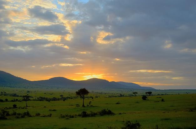 Zonsopgang in afrikaanse savanne, het nationale park van masai mara, kenia, afrika