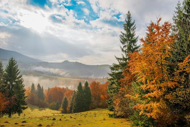 Zonsopgang in bergbos en bewolkte hemel