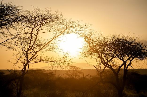 Zonsopgangen boven de acaciabomen van nationaal park, kenia. gouden ochtendlicht