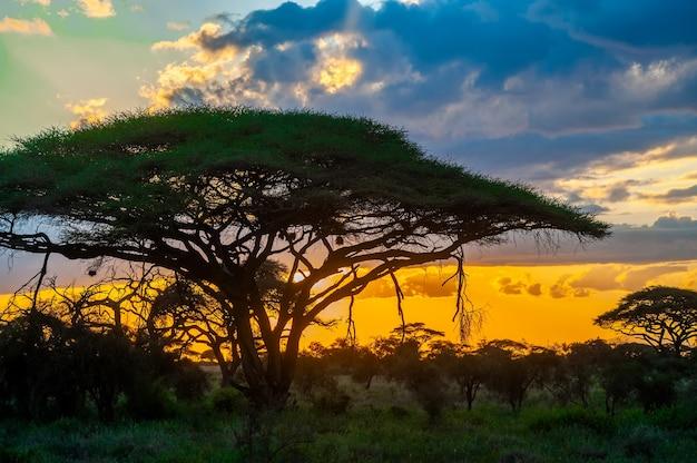 Zonsopgangen in nationaal park, kenia. ochtend licht