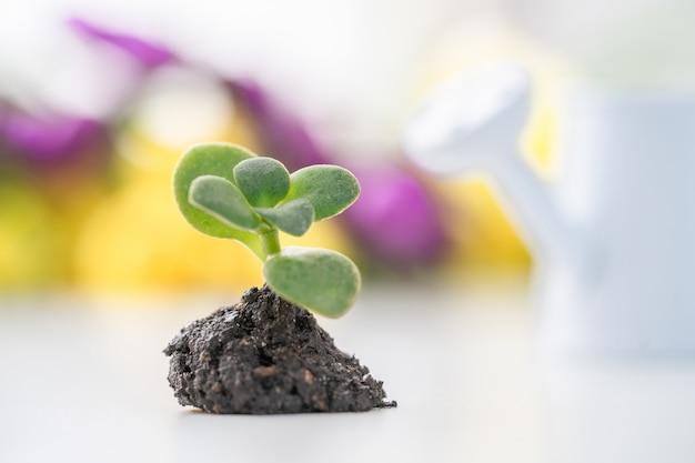 Zorg voor een nieuw leven. een plant planten.