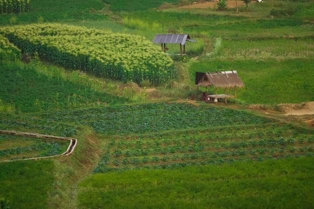 Zuidoost-aziatische landbouw, teelt in noord-thailand