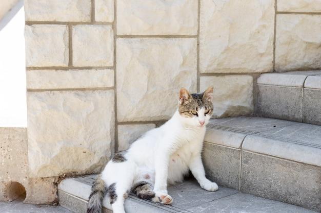 Zwangere kat, zittend op de straat