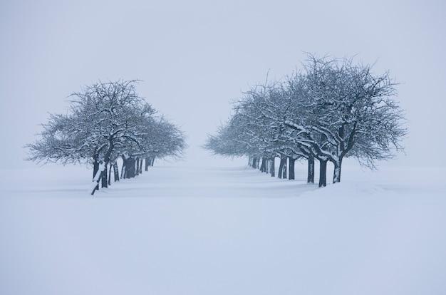 Zware sneeuwval in bomen en paden bedekt met extreme winter