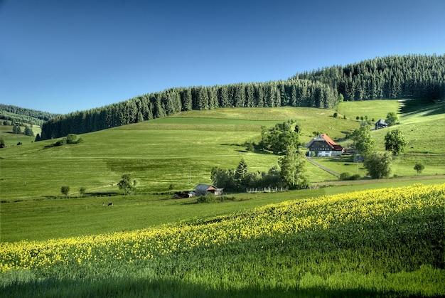 Zwart boslandschap bij de dageraad, duitsland