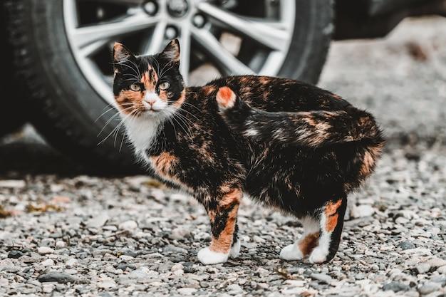 Zwart en bruin kleur kat buiten het huis.