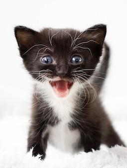 Zwart en wit klein katje