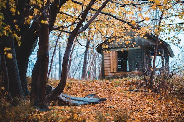 Zwart huis omgeven door bomen