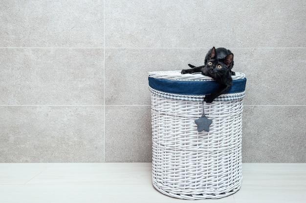 Zwart katje zittend op rieten mand op vloer tegen grijze muur
